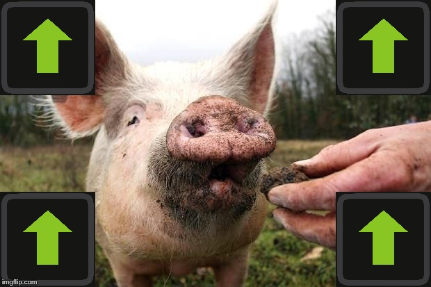 TrufflePig | image tagged in trufflepig | made w/ Imgflip meme maker
