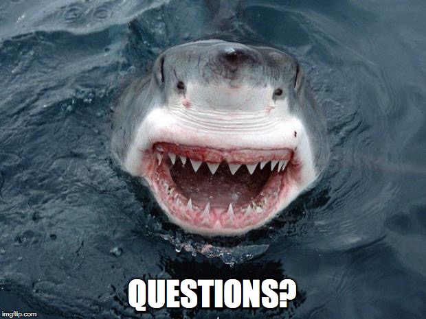 O Hai Shark | QUESTIONS? | image tagged in o hai shark | made w/ Imgflip meme maker