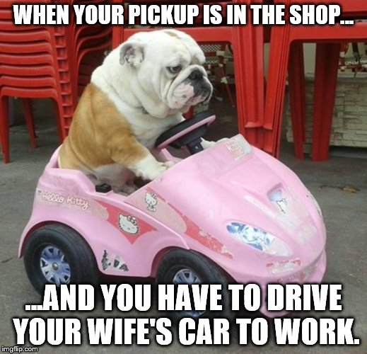 WHEN YOUR PICKUP IS IN THE SHOP... ...AND YOU HAVE TO DRIVE YOUR WIFE'S CAR TO WORK. | image tagged in bulldog | made w/ Imgflip meme maker