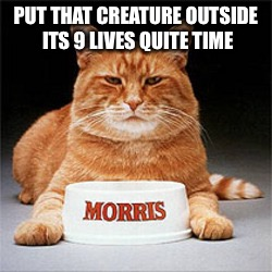 PUT THAT CREATURE OUTSIDE ITS 9 LIVES QUITE TIME | made w/ Imgflip meme maker