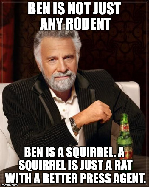 The Most Interesting Man In The World Meme | BEN IS NOT JUST ANY RODENT BEN IS A SQUIRREL. A SQUIRREL IS JUST A RAT WITH A BETTER PRESS AGENT. | image tagged in memes,the most interesting man in the world | made w/ Imgflip meme maker