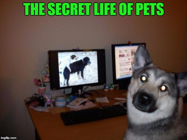THE SECRET LIFE OF PETS | made w/ Imgflip meme maker