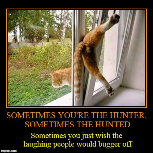 that giggling squirrel faces my wrath when the humans get home... | SOMETIMES YOU'RE THE HUNTER, SOMETIMES THE HUNTED | Sometimes you just wish the laughing people would bugger off | image tagged in funny,demotivationals,cats,funny cats | made w/ Imgflip demotivational maker