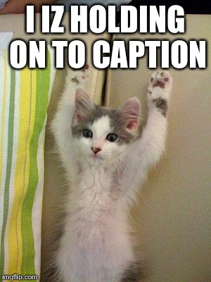 Hands up kitten | I IZ HOLDING ON TO CAPTION | image tagged in hands up kitten | made w/ Imgflip meme maker