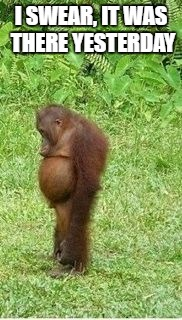 Sad orangutan | I SWEAR, IT WAS THERE YESTERDAY | image tagged in sad orangutan | made w/ Imgflip meme maker