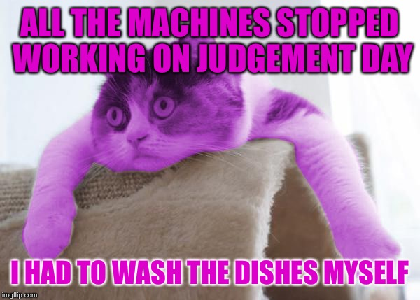 RayCat Stare | ALL THE MACHINES STOPPED WORKING ON JUDGEMENT DAY I HAD TO WASH THE DISHES MYSELF | image tagged in raycat stare | made w/ Imgflip meme maker