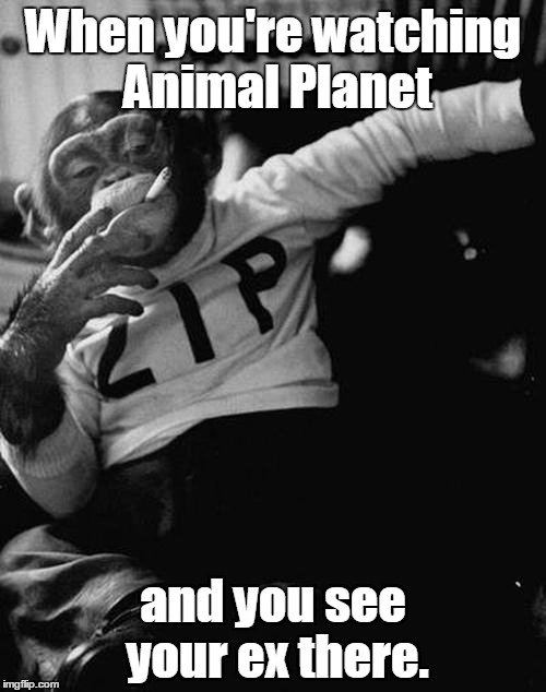 smoking monkey  | When you're watching Animal Planet and you see your ex there. | image tagged in smoking monkey | made w/ Imgflip meme maker