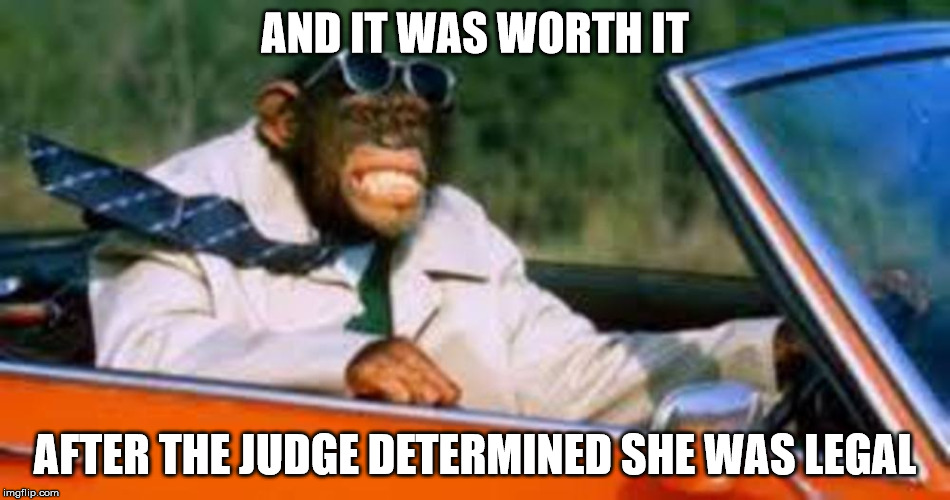 Monkey driver | AND IT WAS WORTH IT AFTER THE JUDGE DETERMINED SHE WAS LEGAL | image tagged in monkey driver | made w/ Imgflip meme maker