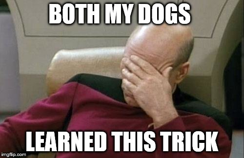 Captain Picard Facepalm Meme | BOTH MY DOGS LEARNED THIS TRICK | image tagged in memes,captain picard facepalm | made w/ Imgflip meme maker