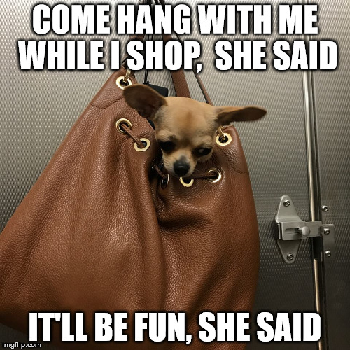 shop | COME HANG WITH ME WHILE I SHOP,  SHE SAID IT'LL BE FUN, SHE SAID | image tagged in i'm just hanging | made w/ Imgflip meme maker