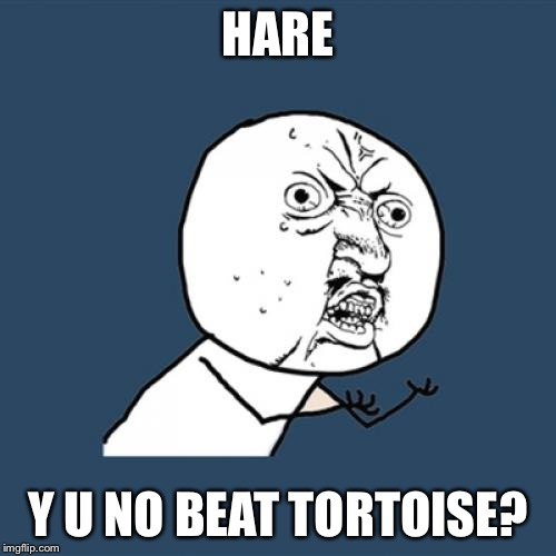 Y U No Meme | HARE Y U NO BEAT TORTOISE? | image tagged in memes,y u no | made w/ Imgflip meme maker