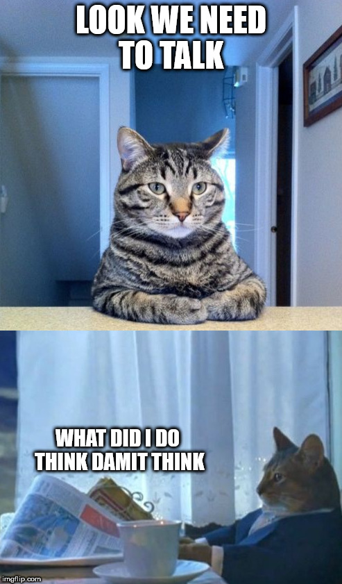 We need to talk | LOOK WE NEED TO TALK WHAT DID I DO THINK DAMIT THINK | image tagged in cats,animals,memes,we need to talk | made w/ Imgflip meme maker