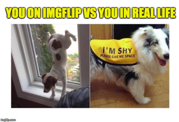 YOU ON IMGFLIP VS YOU IN REAL LIFE | image tagged in dogs,imgflip users,shy,extrovert,personality | made w/ Imgflip meme maker
