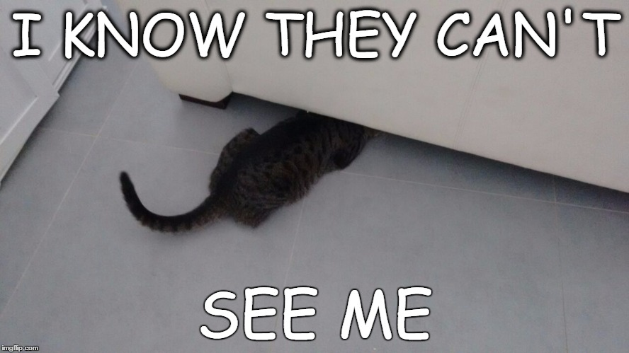 they can't see yogev the cat | I KNOW THEY CAN'T SEE ME | image tagged in cats,funny,funnycats,cat,hiding,scared cat | made w/ Imgflip meme maker