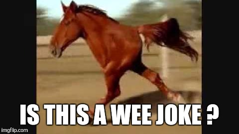 Memes, Horse, Funny | IS THIS A WEE JOKE ? | image tagged in memes,horse,funny | made w/ Imgflip meme maker