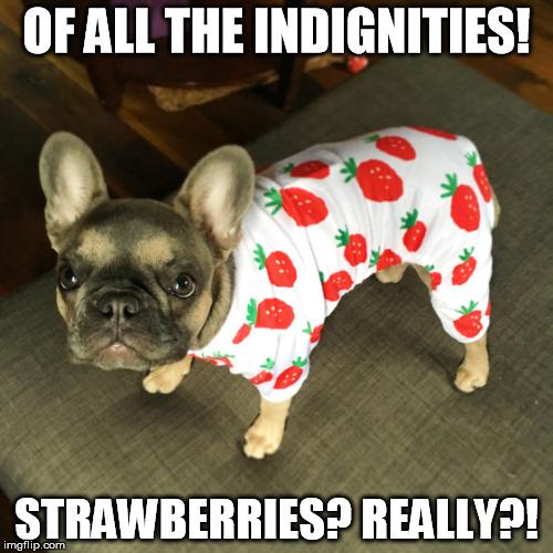 Funny Dog Meme Generator : Strawberry pug pj s imgflip