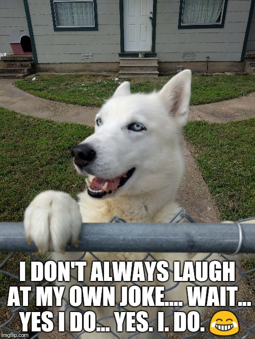 I DON'T ALWAYS LAUGH AT MY OWN JOKE.... WAIT... YES I DO... YES. I. DO.  | image tagged in laughing dog | made w/ Imgflip meme maker