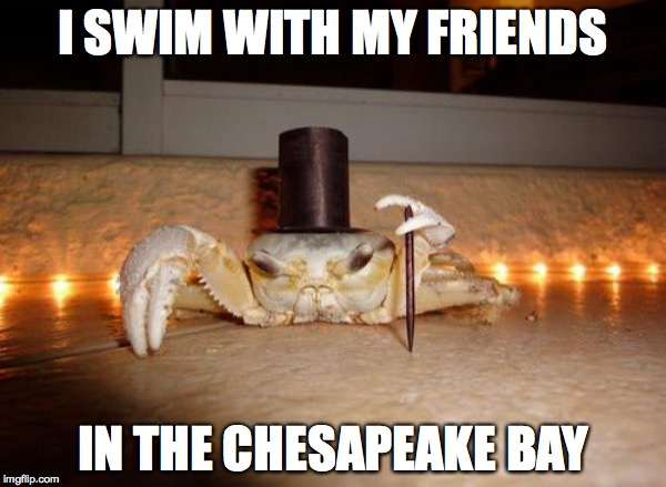 Crabs In The Chesapeake Bay |  I SWIM WITH MY FRIENDS; IN THE CHESAPEAKE BAY | image tagged in swimming,friends,chesapeake bay,crabs | made w/ Imgflip meme maker