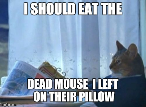 Cat | I SHOULD EAT THE DEAD MOUSE  I LEFT ON THEIR PILLOW | image tagged in memes,i should buy a boat cat | made w/ Imgflip meme maker