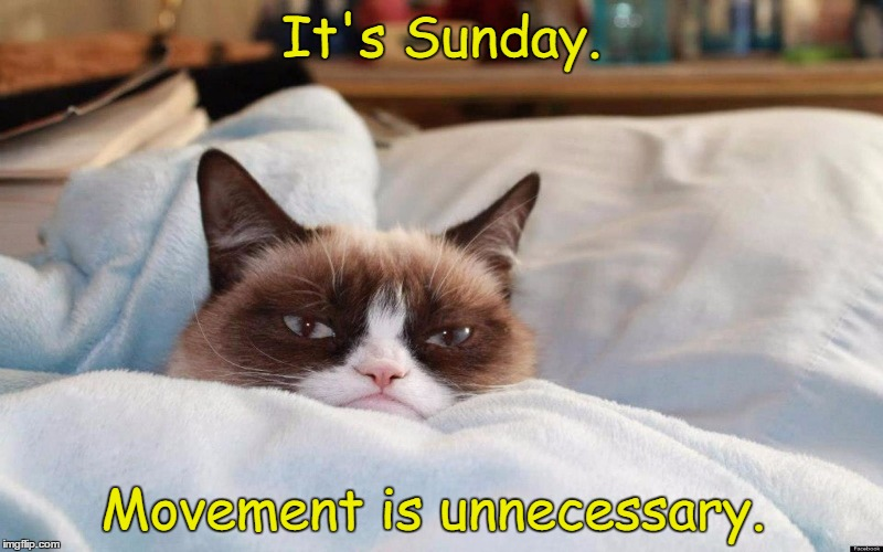 Happy Sunday, Everyone!  | It's Sunday. Movement is unnecessary. | image tagged in grumpy cat bed,grumpy cat | made w/ Imgflip meme maker