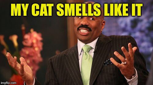 Steve Harvey Meme | MY CAT SMELLS LIKE IT | image tagged in memes,steve harvey | made w/ Imgflip meme maker