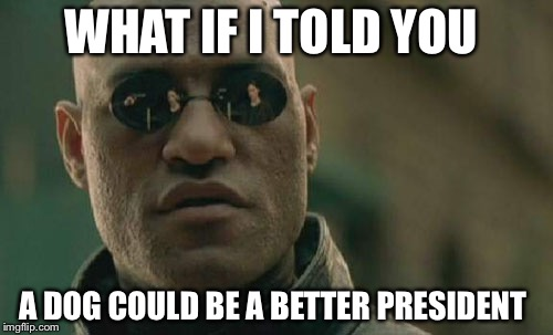 Matrix Morpheus Meme | WHAT IF I TOLD YOU A DOG COULD BE A BETTER PRESIDENT | image tagged in memes,matrix morpheus | made w/ Imgflip meme maker
