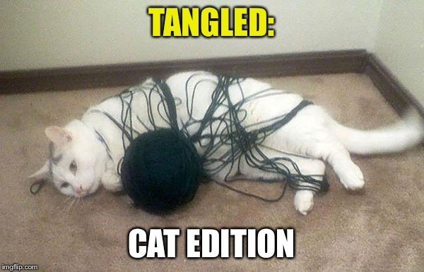 Except yarn instead of hair | TANGLED: CAT EDITION | image tagged in cats,tangled,yarn,funny | made w/ Imgflip meme maker