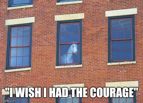 "Memes     horse  | ""I WISH I HAD THE COURAGE"" 