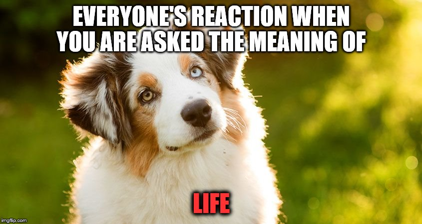 Dogs Dez Days | EVERYONE'S REACTION WHEN YOU ARE ASKED THE MEANING OF LIFE | image tagged in life | made w/ Imgflip meme maker