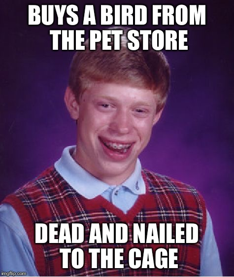 Bad Luck Brian Meme | BUYS A BIRD FROM THE PET STORE DEAD AND NAILED TO THE CAGE | image tagged in memes,bad luck brian | made w/ Imgflip meme maker