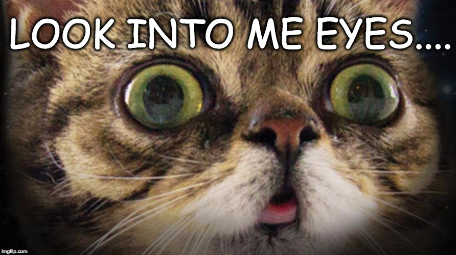 LOOK INTO EYES |  LOOK INTO ME EYES.... | image tagged in cat,lil bub,look into my eyes,kitten,kitty | made w/ Imgflip meme maker