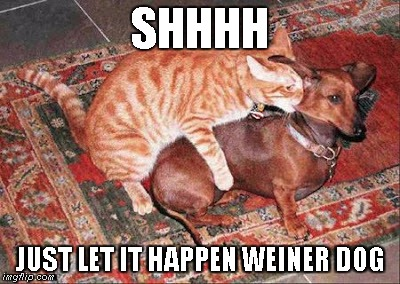 On the Nip Again | SHHHH JUST LET IT HAPPEN WEINER DOG | image tagged in cats,cat nip,weiner dog | made w/ Imgflip meme maker