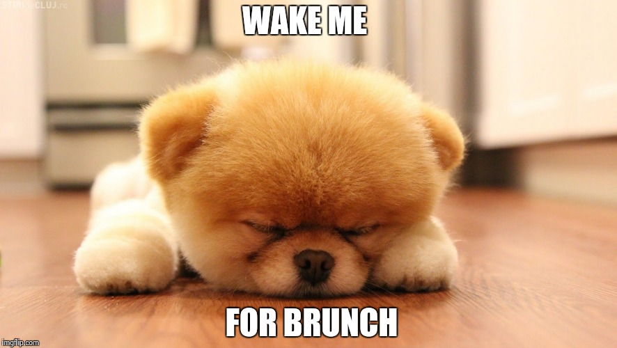 Sleeping dog | WAKE ME FOR BRUNCH | image tagged in sleeping dog | made w/ Imgflip meme maker