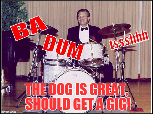 THE DOG IS GREAT, SHOULD GET A GIG! | made w/ Imgflip meme maker