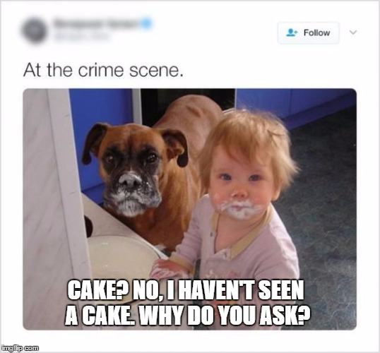 Cake? | CAKE? NO, I HAVEN'T SEEN A CAKE. WHY DO YOU ASK? | image tagged in kids,dogs,guilty dog,cake,guilt | made w/ Imgflip meme maker