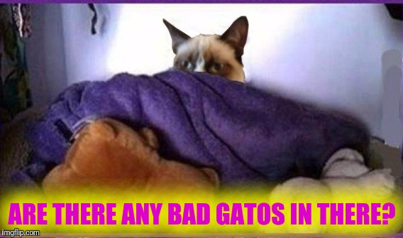 ARE THERE ANY BAD GATOS IN THERE? | made w/ Imgflip meme maker