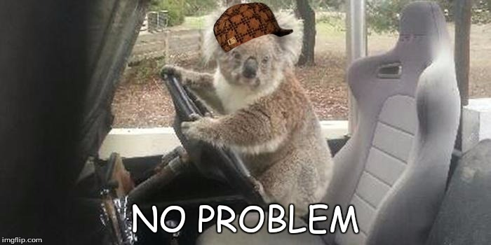 koala rolling | NO PROBLEM | image tagged in koala rolling,scumbag | made w/ Imgflip meme maker