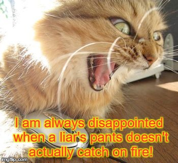 Angry Internet Cat | I am always disappointed when a liar's pants doesn't actually catch on fire! | image tagged in angry internet cat,politics,memes | made w/ Imgflip meme maker