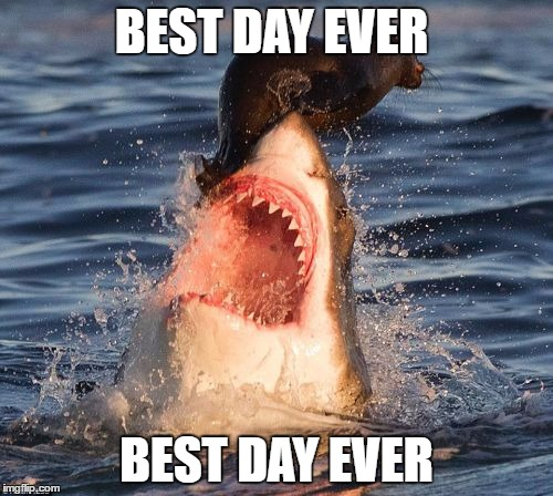 Travelonshark | BEST DAY EVER BEST DAY EVER | image tagged in memes,travelonshark | made w/ Imgflip meme maker
