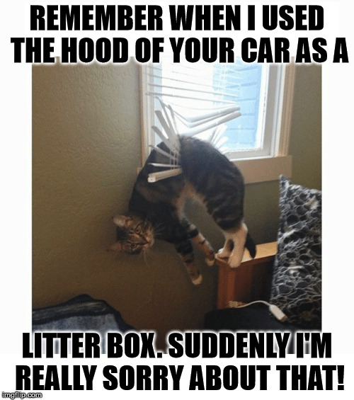 Suddenly  Sorry Kitty | REMEMBER WHEN I USED THE HOOD OF YOUR CAR AS A LITTER BOX. SUDDENLY I'M REALLY SORRY ABOUT THAT! | image tagged in asshat,i've really done it this time,help i've fallen and i can't get up,i'm an idiot,help,draped cat | made w/ Imgflip meme maker