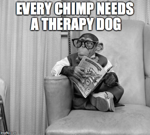 EVERY CHIMP NEEDS A THERAPY DOG | made w/ Imgflip meme maker