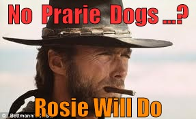 In My Day... | No  Prarie  Dogs ...? Rosie Will Do | image tagged in in my day | made w/ Imgflip meme maker