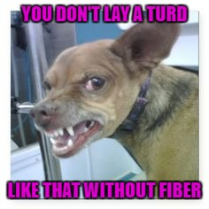 YOU DON'T LAY A TURD LIKE THAT WITHOUT FIBER | made w/ Imgflip meme maker