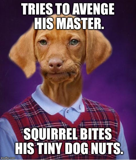 Bad Luck Dog | TRIES TO AVENGE HIS MASTER. SQUIRREL BITES HIS TINY DOG NUTS. | image tagged in bad luck dog | made w/ Imgflip meme maker