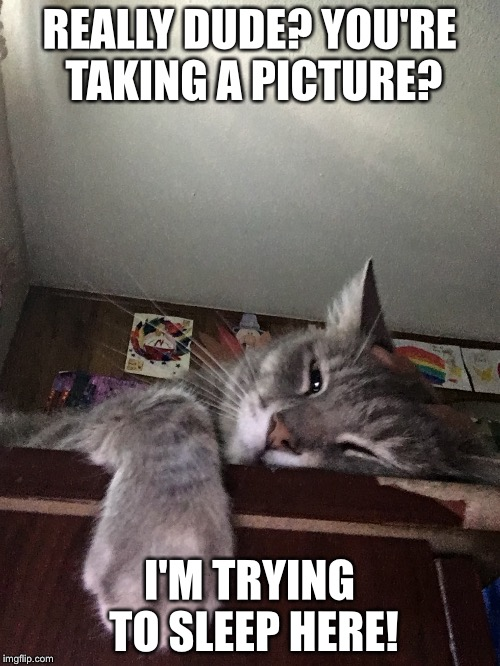Sleepy Kitty | REALLY DUDE? YOU'RE TAKING A PICTURE? I'M TRYING TO SLEEP HERE! | image tagged in sleep,cats | made w/ Imgflip meme maker