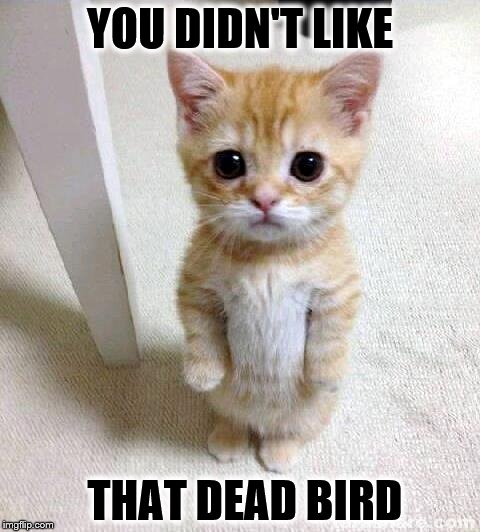 Cute Cat Meme | YOU DIDN'T LIKE THAT DEAD BIRD | image tagged in memes,cute cat | made w/ Imgflip meme maker