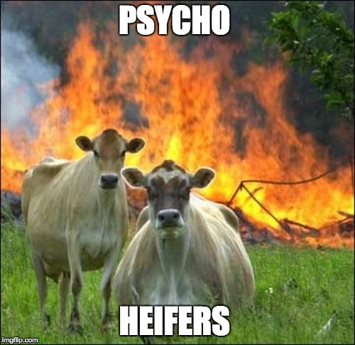 Evil Cows Meme | PSYCHO HEIFERS | image tagged in memes,evil cows | made w/ Imgflip meme maker