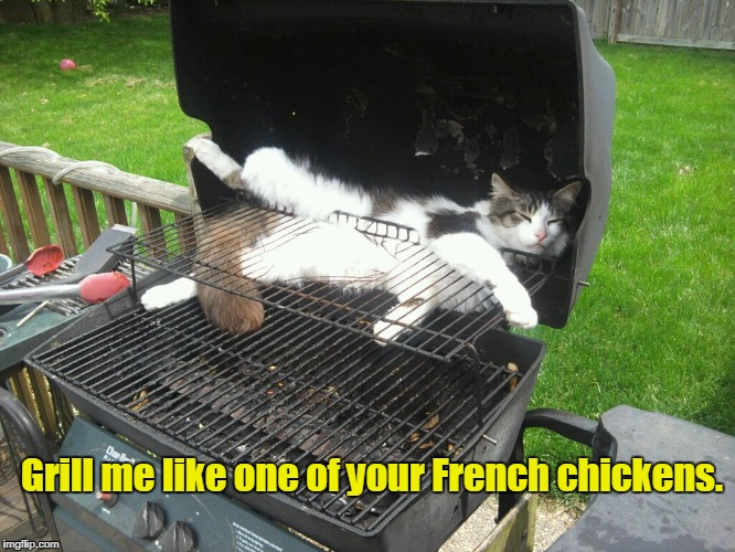 Grill me Jack. | Grill me like one of your French chickens. | image tagged in funny,cat,sleepy cat,grilling | made w/ Imgflip meme maker