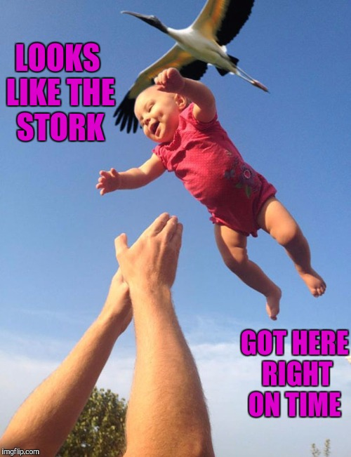 When the stork drops off your baby right on time |  LOOKS LIKE THE STORK; GOT HERE RIGHT ON TIME | image tagged in memes,babies,perfectly timed photo | made w/ Imgflip meme maker