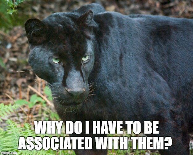 black panther | WHY DO I HAVE TO BE ASSOCIATED WITH THEM? | image tagged in black panther | made w/ Imgflip meme maker